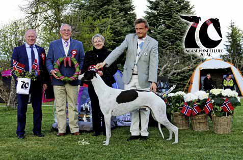 Best in Show Greyhoundhannen Jets Man in The Moon