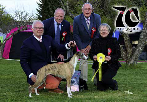Best in Show 3 Whippettispen Librium Remarkable Rose